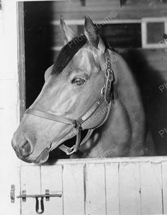 Click HERE to see my other auctions Horse Sea Biscuit Beautiful Close Up 1930s…