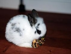 Bunny Nibbles on a Treat - August 28, 2011