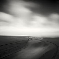 Seagulls I I I, photography by Nathan Wirth