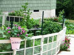 Recycled windows as fencing!