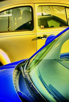 blue and yellow bugs