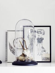 Les Cabinets de curiosités - FrenchyFancy
