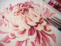 paintings of chrysanthemums | The red mixes were Permanent Rose, Opera Rose, Quinacridone Red ...