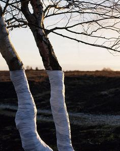 The Tree Line: romanticismi en plein air.  http://www.zanderolsen.com/