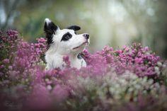 Wapi   par Erell photography