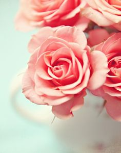 pink sweetheart roses