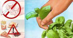 Chińskie zioło w połączeniu z żelazem zabija 98 % komórek raka piersi w ciągu 16 godzin!