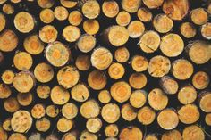 Połamane gałęzie drzewa po burzy lub konieczność całkowitej wycinki zieleni wysokiej? W naszej firmie to codzienność! Wybierz nasz podnośnik koszowy, a my zapewnimy ci także obsługę operatorską. To wszystko, czego potrzebujesz!