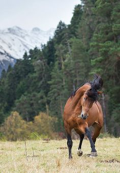 photoostrov | Лошади