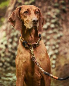 """Handgefertigtes Halsband und Leine aus schwarzem Kletterseil und Leder mit Leo-Print.Maße: Bitte den anliegend gemessenen Halsumfang unten in Zentimetern eingeben. Für die ganz Wilden: Mit viel Liebe und Sorgfalt handgefertigt in Österreich, wird das Set (bestehend aus Halsband und Leine) mit Kletterseil """"Black Mamba"""" durch das Leder mit Leoparden-Print zum absoluten Hingucker.   Nachhaltige Hundeleine   Tauleine Hund   Halsband Tau Kletterseil   Hundezubehör nachhaltig   Hundezubehör Tau Leo Print, Poodle, Labrador Retriever, Toy, French, Lifestyle, Animals, Climbing Rope, Dog Leash"""