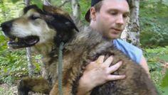 Ele andava errante pela mata até que foi avistado por um homem que pediu ajuda para socorrer o cão. Um homem foi trabalhar em uma parte um pouco distante em uma floresta de Hampshire, nos Estados U…