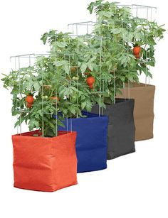 Grow Bags -- Pretty... but, if you're gonna grow in bags, just use the plastic bag that the soil comes in and save yourself $15 per planter... I have an example of that on this board... I am thinking of trying it out this summer... Deb