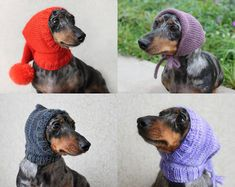 Lucky Fox Knits by LuckyFoxKnits on Etsy Mini Dachshund, Fancy Hats, Pet Clothes, Little Dogs, Utila, Pulls, Small Dogs, Your Pet, Cute Dogs