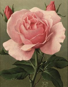 Pink Rose by Jan Voerman Jun. (1890-1976) signed with monogram (lower right) oil on canvas laid down on board 20 x 16 cm.