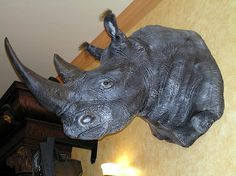 The Rhino Horn Rush: Stigma Behind a Tradition.