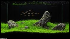 There are few things quite as calming as a perfectly landscaped aquarium