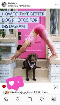 Learn how to take better dog photos for Instargram with my top 5 dog photo tips and advice from professional pet photographers. Easy Pets, Best Dog Photos, Grey Dog, Dog Stories, Pet Photographer, Dog Friends, Dog Mom, Dog Pictures, Pet Care