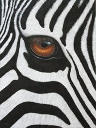 Zebra Eye...another something to draw/paint