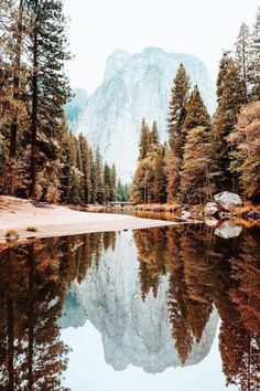 Yosemite National Park // Ryan Longnecker