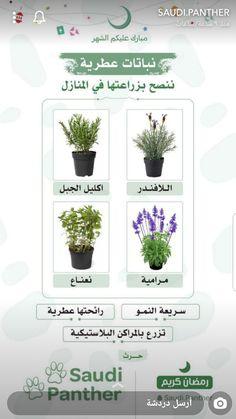 Veg Garden, Garden Care, Garden Plants, Indoor Plants, House Plants Decor, Plant Decor, Planting Roses, Planting Succulents, Tiny Garden Ideas