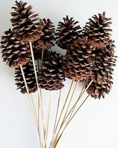 $26.99  Natural Stemmed Ponderosa Pine Cones Use them in any arrangement that you would use pine cones. These pine cones are already ready to go in an arrangement with the stem attached. They are beautiful� More