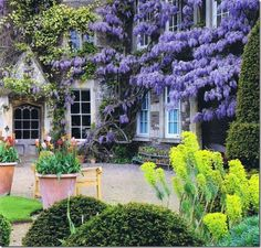 In the south, wisteria is considered a weed. I, however, love it and think it's beautiful.