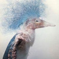 The Impressive Work of Fredrik Ödman