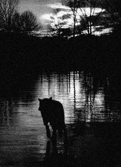 """""""Only the mountain has lived long enough to listen objectively to the howl of the wolf."""" Aldo Leopold"""