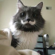 What a nice fancy mustache