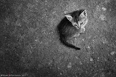 Kitty on the Moon?! by ZoranPhoto.deviantart.com on @deviantART