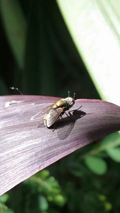 @OnTheWay #InsectsHer #FLY