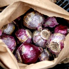 Plan To Plant Fall Bulbs for Spring Color