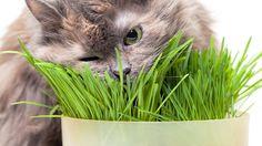 Quelles sont les bonnes plantes pour mon chat ?