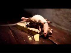 Un ratón en plena forma.