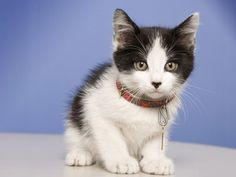 A Bright-eyed Kitten, makes us all kids again