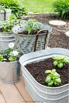 5 simple tips for successfully growing herbs in containers. Includes a list of h. 5 simple tips for successfully growing herbs in containers. Includes a list of herbs that can be planted together & ways to use herbs in your everyday life. Indoor Gardening Supplies, Container Gardening, Compost Container, Container Herb Garden, Container Flowers, Container Plants, Growing Plants, Growing Vegetables, Growing Herbs In Pots