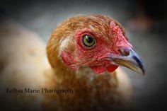 Ginger © Eelhsa Marie Photography