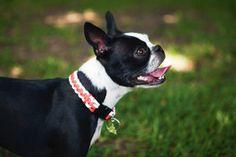 Parachute Cord Dog Collar