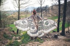 Asas de borboletas