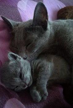 Snuggly Mummy Hugs Cute Cartoon Animals Cats And Kittens Cute