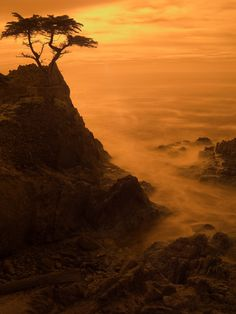 "If you ever have a chance......Lone Cypress on Seventeen Mile Drive, Monterey, California | by sjbvrsn  |   ""Pacific sunset"" is the name of the color on the #newmurano #nissannyias #sponsored"