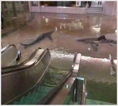 この下りエスカレーター乗っちゃったら {{{{( ▽|||)}}}} (クウェートの科学センターでサメの水槽が割れたらしい)