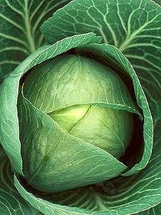 Cabbage super food: stimulates the immune system, kills bacteria, viruses & is a good blood purifier. Fruit And Veg, Fruits And Vegetables, Terra Verde, Best Superfoods, Kraut, Shades Of Green, Food Photo, Natural Remedies, Herbalism