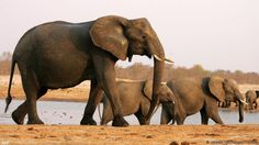 Trump puts on hold decision to lift ban on big game elephant trophy imports