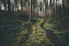 explore - Landscape Photography Art Print  A young man walking through a forest