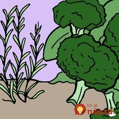 What are companion plants for tomatoes? Learn which vegetables to plant side-by-side using our companion planting guide. Growing Tomatoes, Growing Vegetables, Companion Planting Guide, Planting Garlic, Tomato Farming, Tomato Garden, Different Plants, Easy Garden, Garden Plants