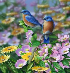 Bradley Jackson Bradley Jackson — Summer Blues. Eastern Bluebirds