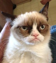 Grumpy is the new gorgeous.