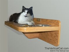Cat Food Station Wall Mounted Cat Feeding Station Shelf - The Vertical Cat's Contemporary Cat Furniture, Trees, Shelves and Stairs Contemporary Cat Furniture, Cat Feeding Station, Cat Stairs, Diy Cat Toys, Wood Cat, Cat Feeder, Cat Shelves, Cat Room, Animal Projects
