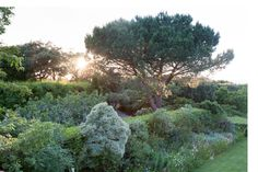 A look at the greenery that surrounds the home of François and Maryvonne Pinault outside Saint-Tropez.